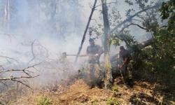 Военнослужещи гасят пожари край Карлово и Свиленград