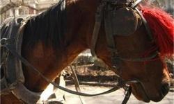 Пак тръгна приказката за коня с капаци